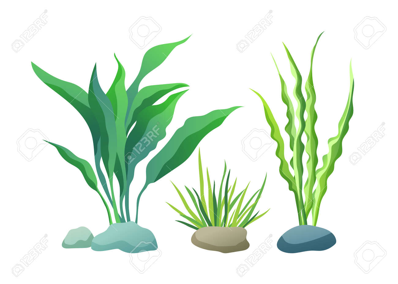 Sea or aquarium algae types vector illustration set on white. Straight and wavy seaweed with large and small leaved, green and violet colored poster. - 127558698