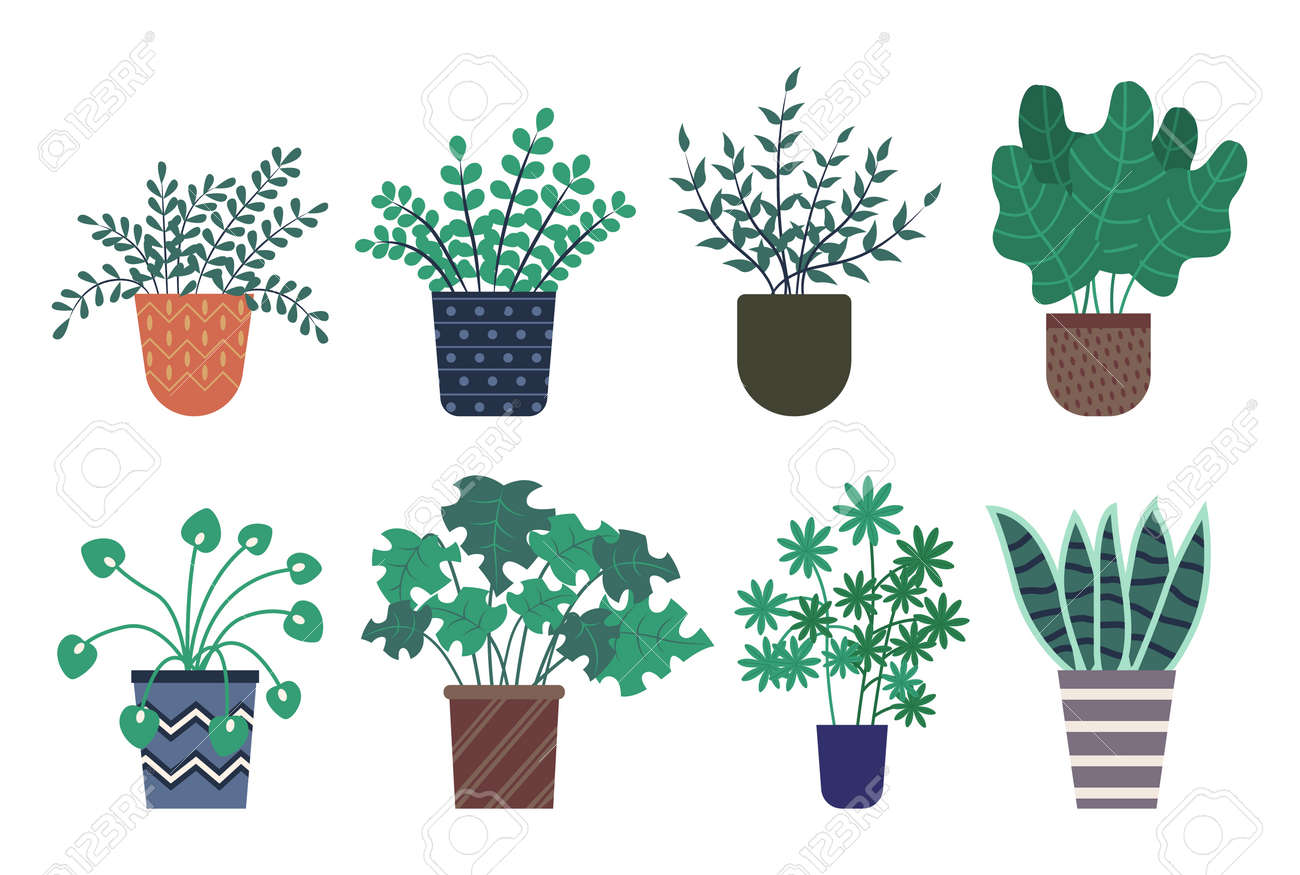 Decorative Plants Vector Isolated Icons Set Potted Flowers