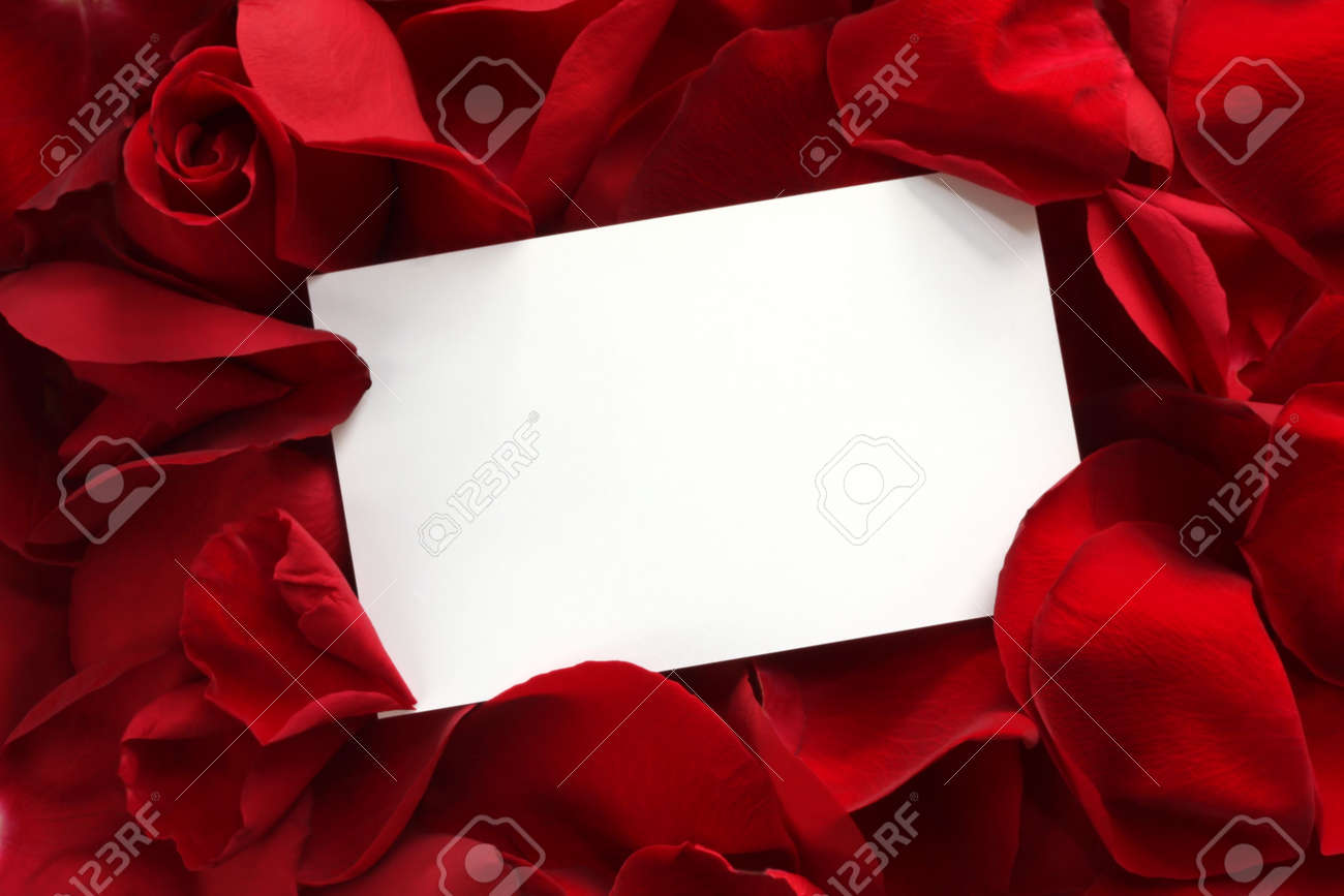 Blank white gift card on a bed of red rose petals, ready for your message. Stock Photo - 3574588