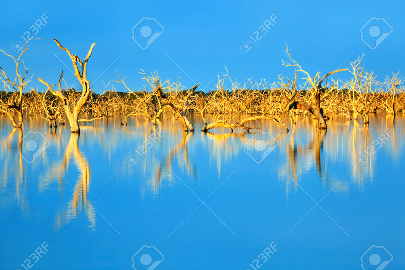 Trees submerged in man-made lake, in glorious sunset light.  Menindee, outback New South Wales, Australia. Stock Photo - 5366445