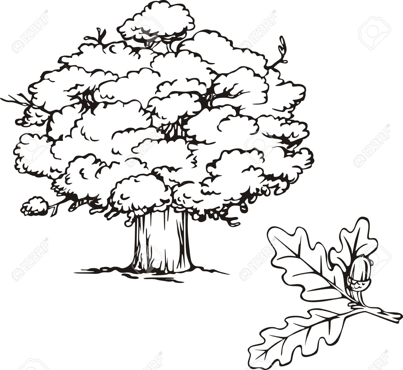 Oak tree and branch with acorn. Black and white  illustration. Stock Vector - 14744417