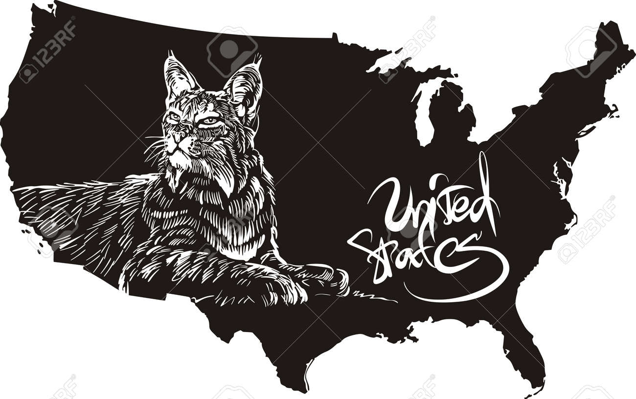 Bobcat And U S Outline Map Black And White Vector Ilration Lynx Rufus Stock