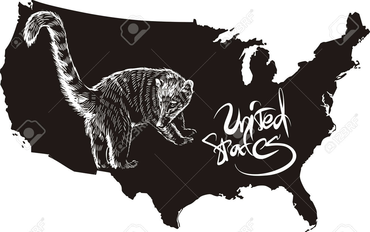 Coati And Us Outline Map Black And White Vector Ilration Usa Map Icon