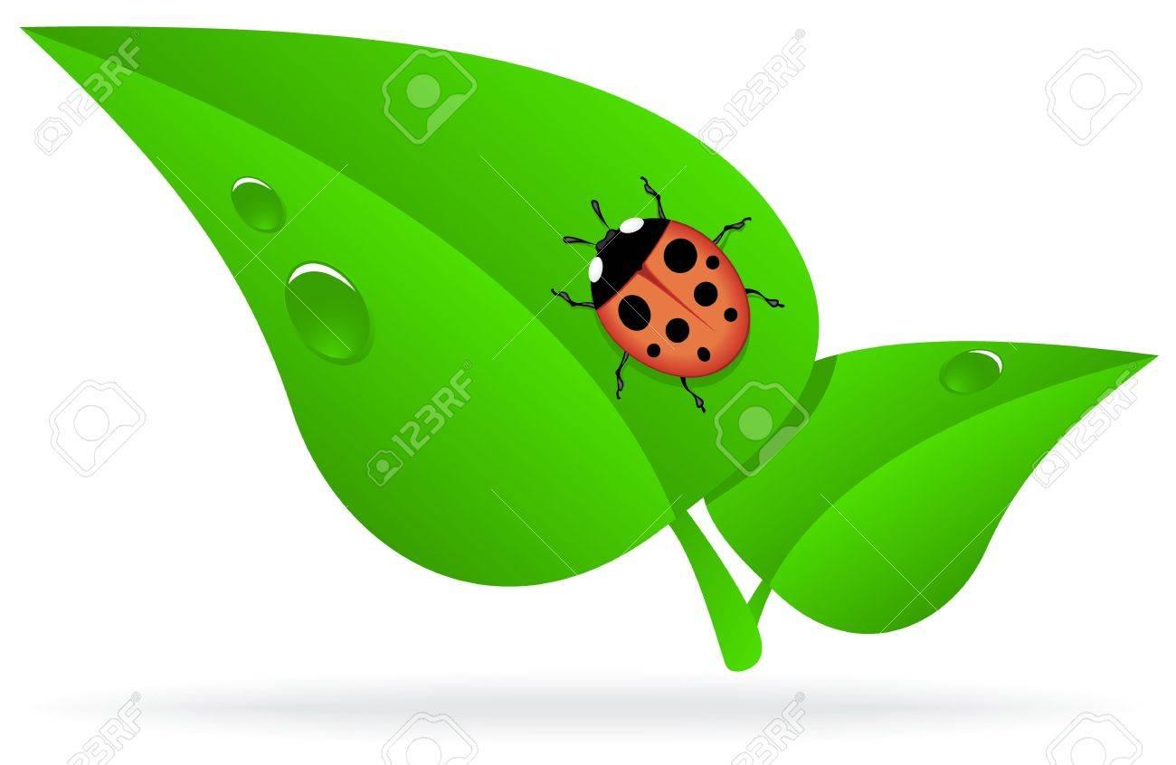 Ladybug On A Green Leaf With Dew Drops Royalty-Fri Clipart, Vektorer ... for Clipart Ladybug On Leaf  584dqh