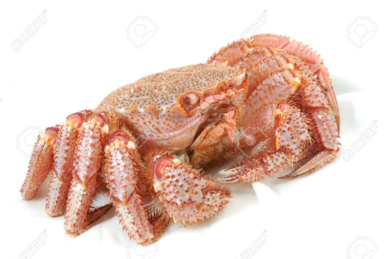Alive Alaskan king crab  on the white table cloth in restaurant Stock Photo - 4082449