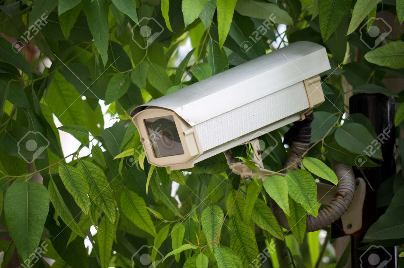 Surveillance camera hided  on tree to oversee somewhere Stock Photo - 12631699
