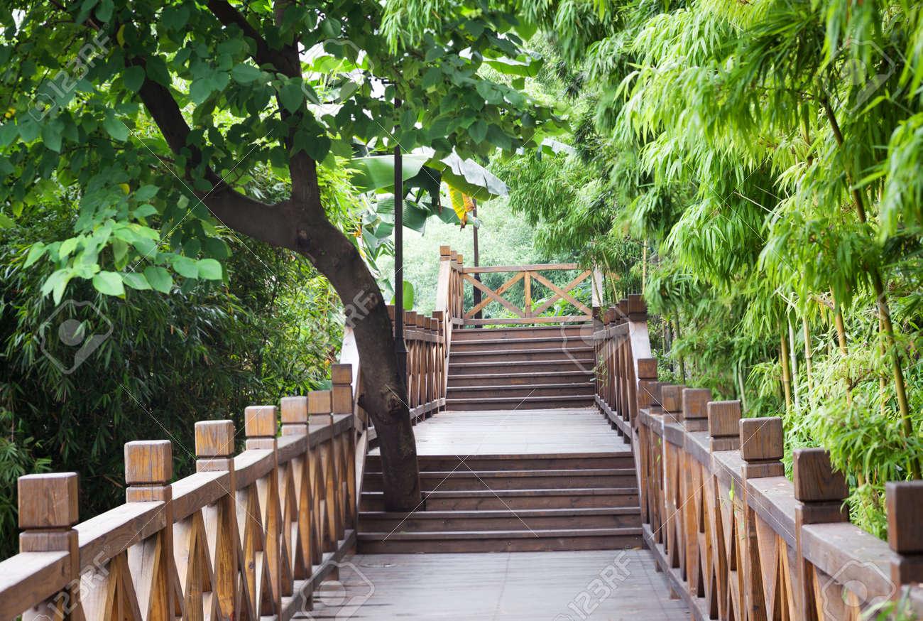 Pasarela De Madera Traves De Un Frondoso Jardin De Bambu Fotos - Jardin-bambu