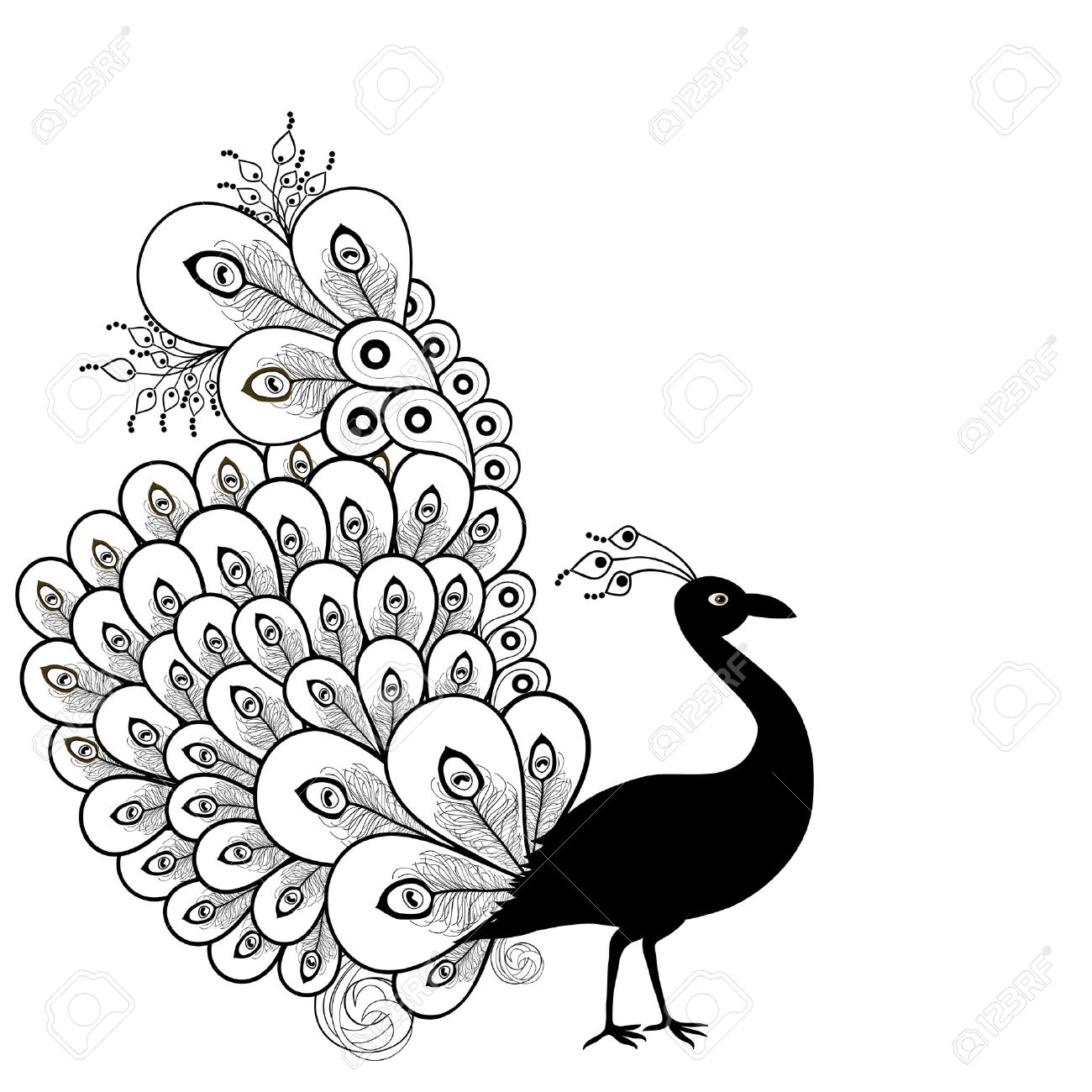 Peacock in Black And White