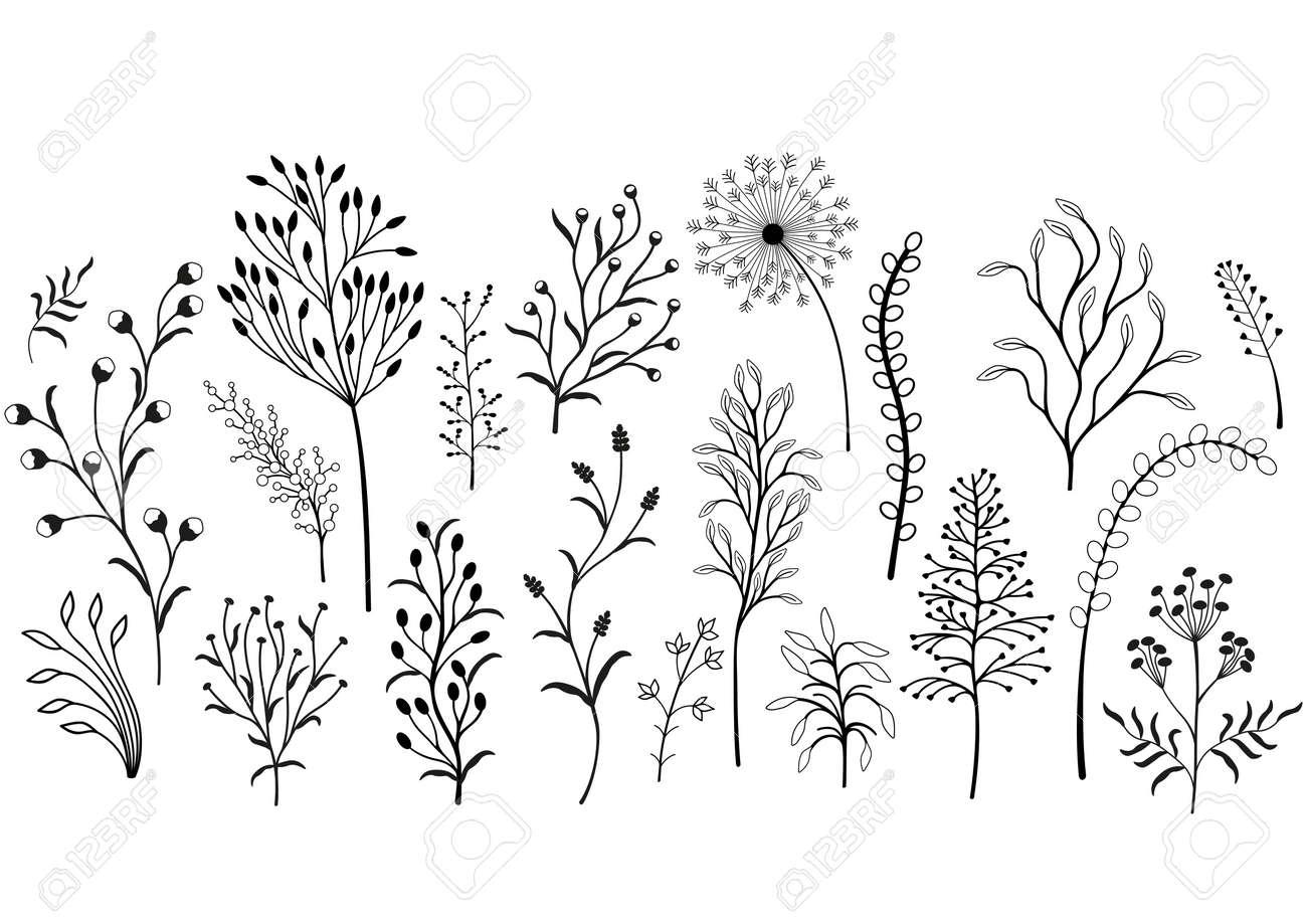 Set of wild plants, Black and white illustration. - 124853420