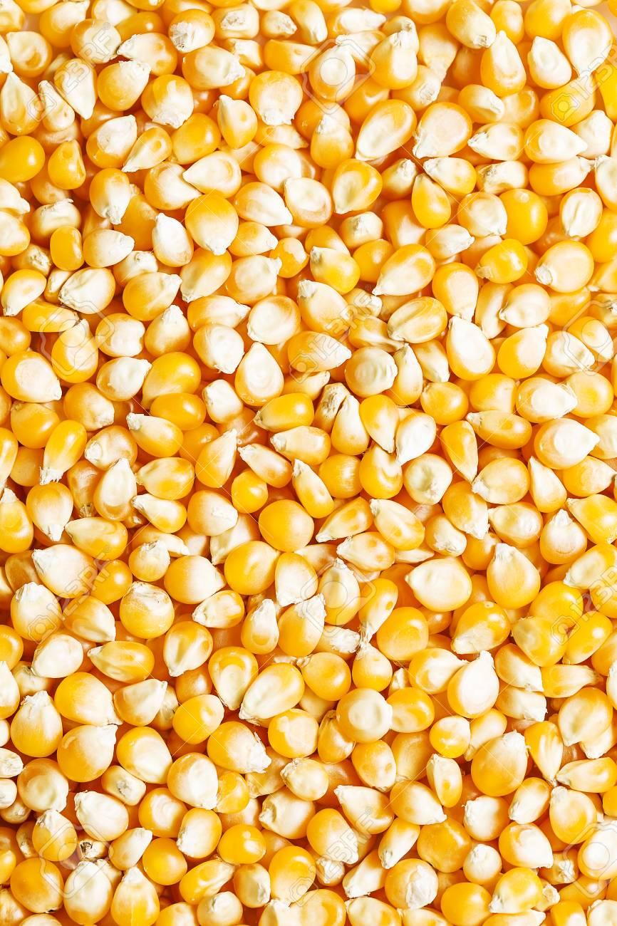 Background of fresh golden raw corn kernels - 120509681