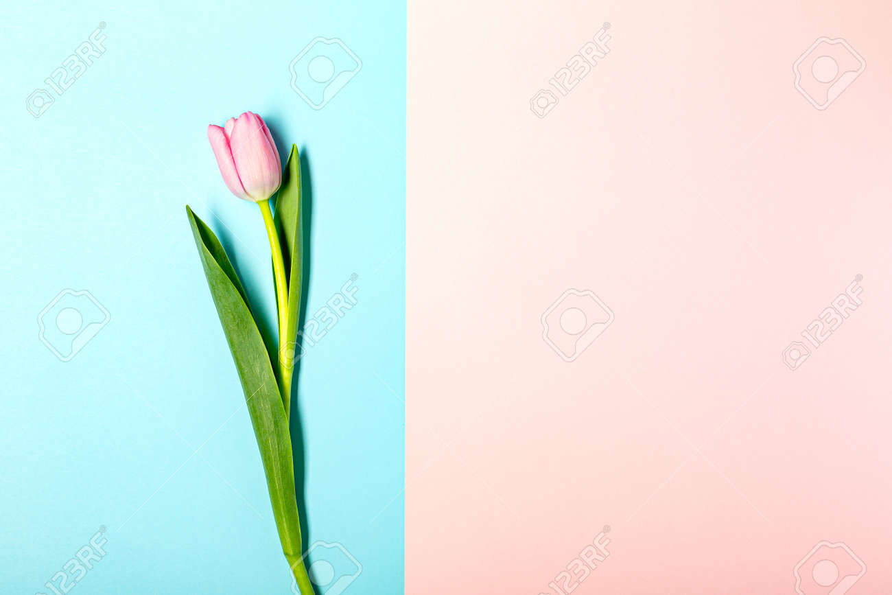 Flat lay with tulip flowers on pastel pink - 166943888