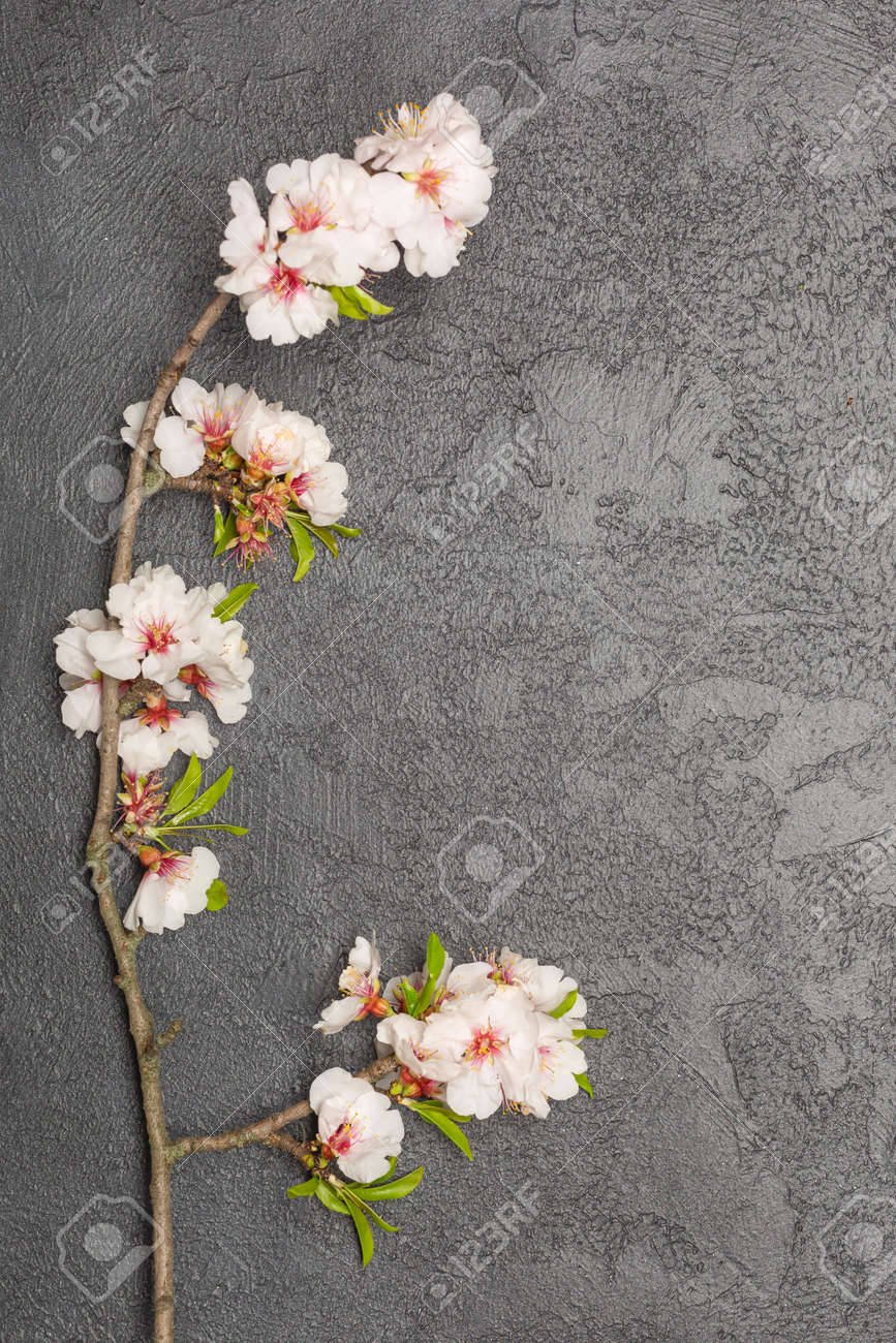 Flat lay banner with branch of cherry blossom flowers - 167193812