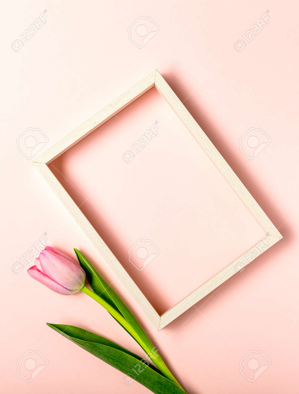 Flat lay with tulip flowers on pastel pink - 167193801