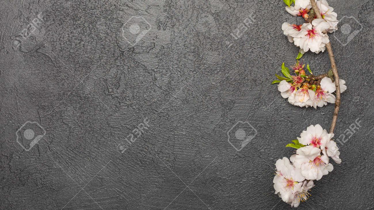 spring background with fresh flower on black background. - 167779824