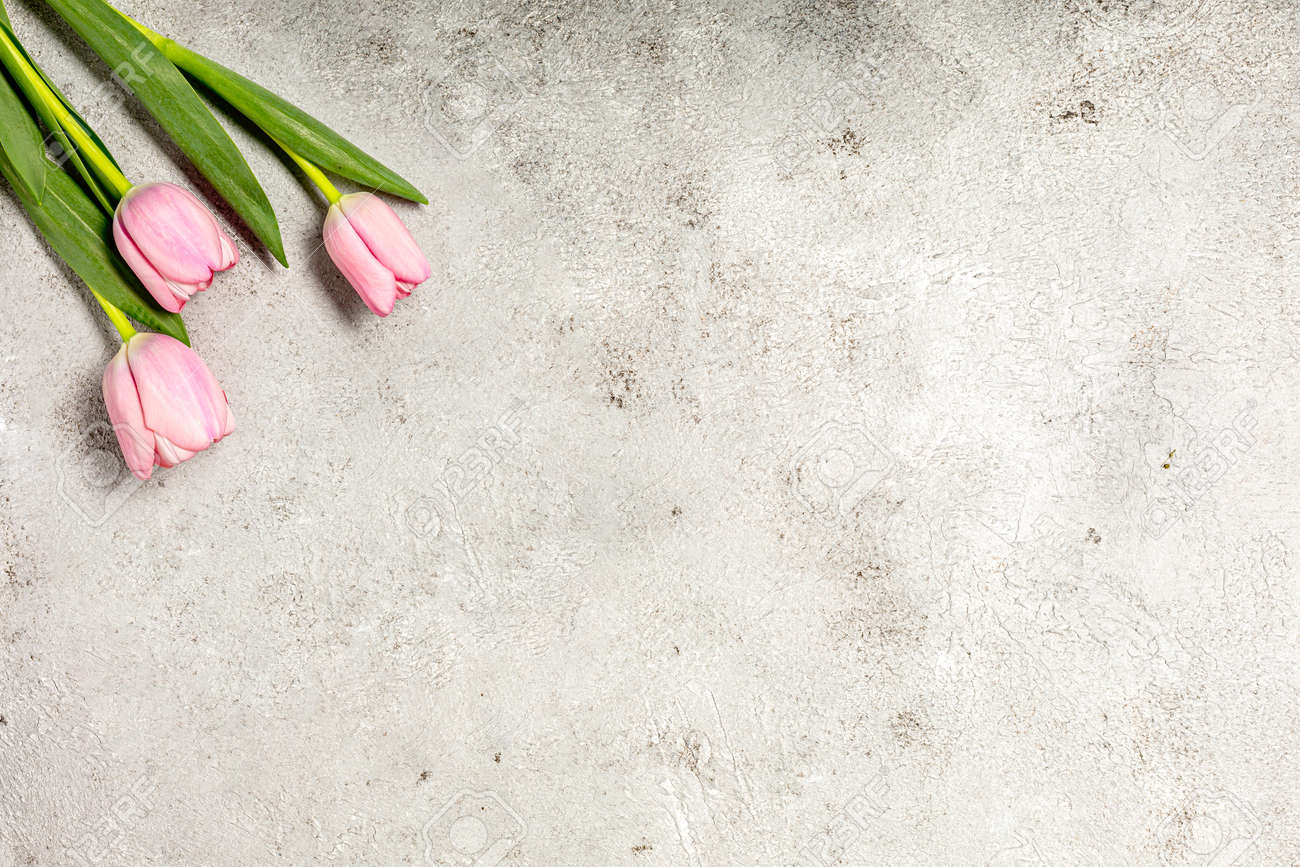 Fresh pink tulip flowers on ultimate gray wall - 167779830