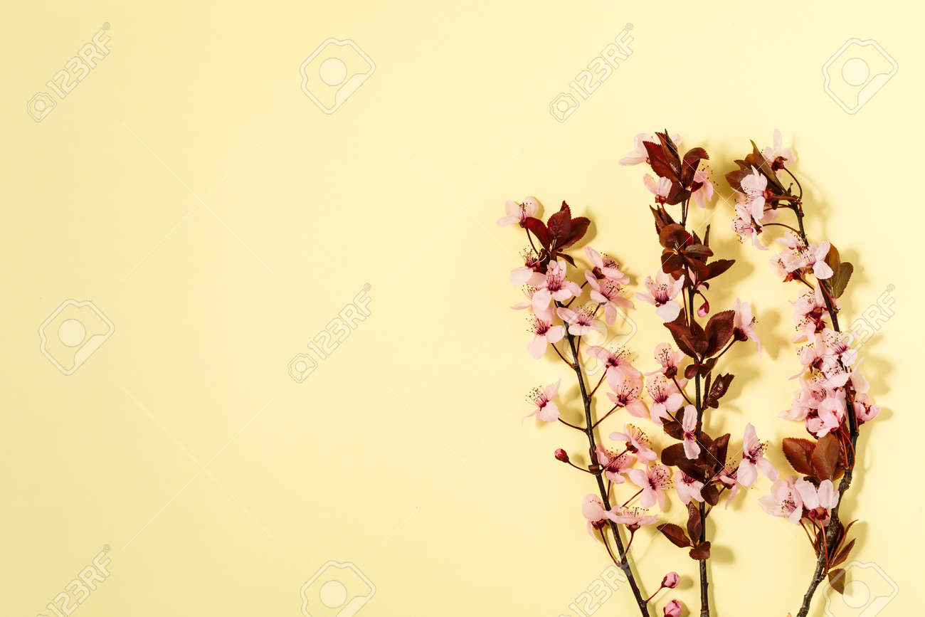 spring background with fresh flower on yellow background. - 167779845