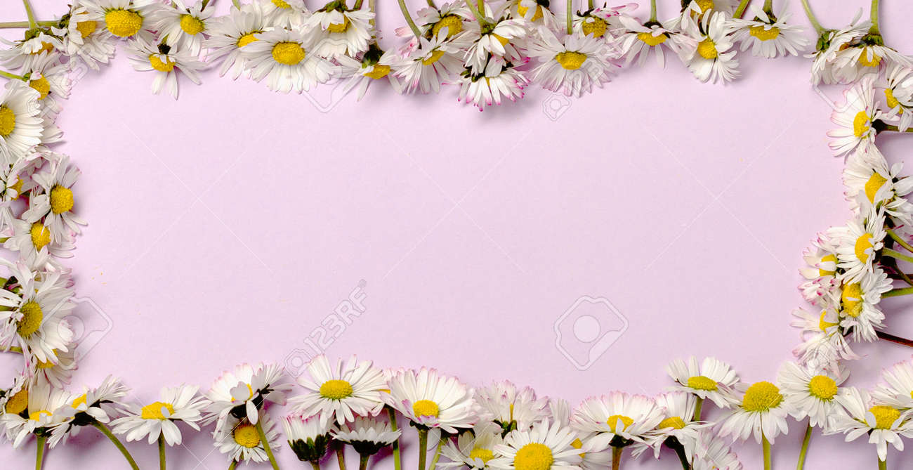 Pattern with fresh daisy flowers on pastel backround. - 167779880