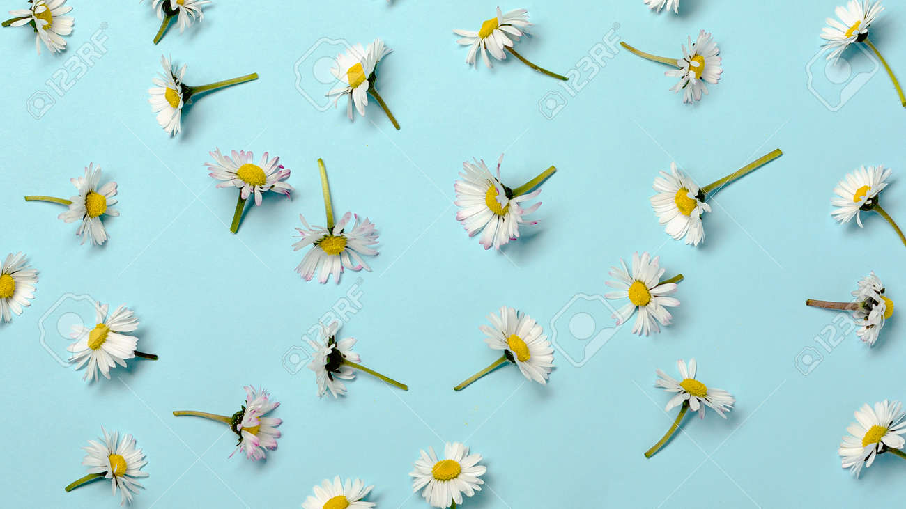 Pattern with fresh daisy flowers on pastel backround. - 167779882