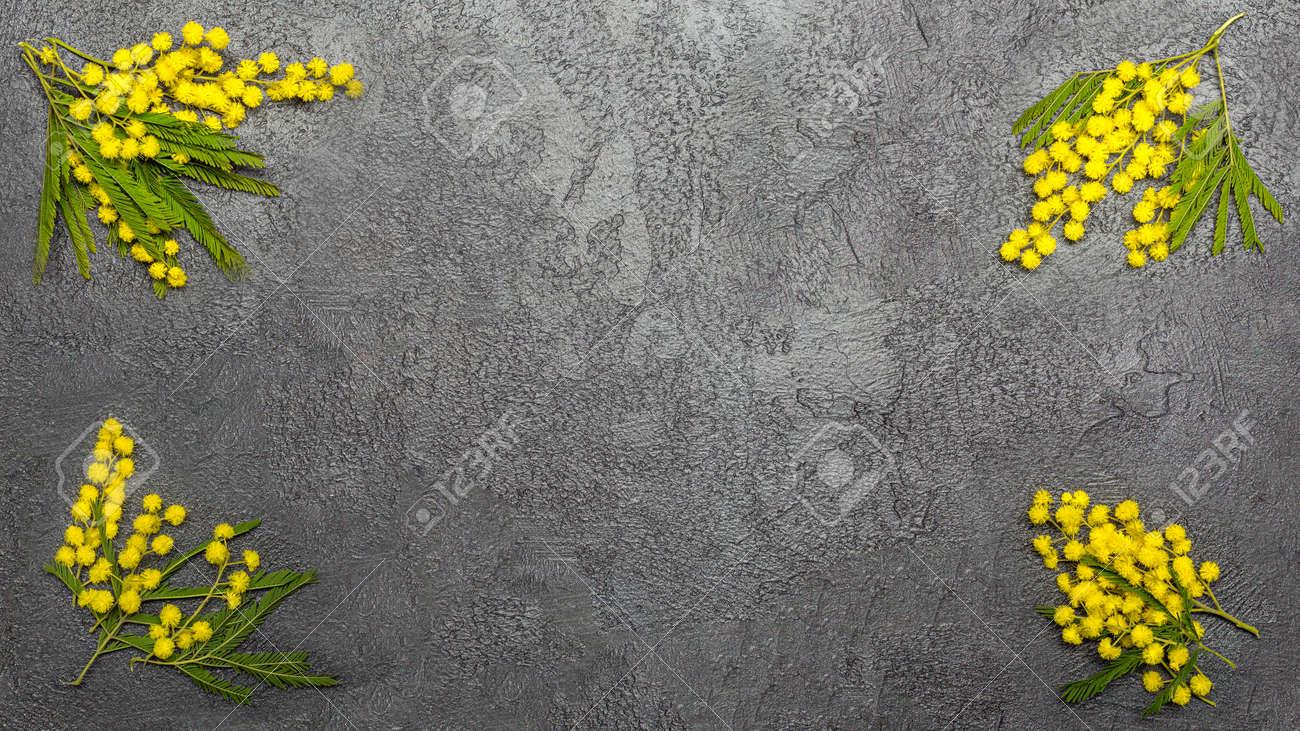 Beautiful yellow mimosa branch background over dark - 167780035