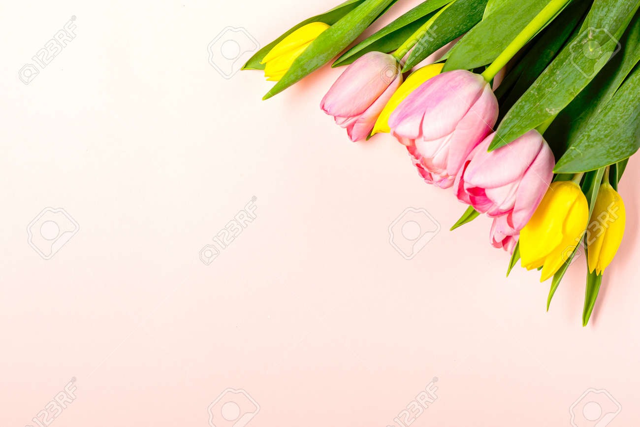 Fresh pink and yellow tulip flowers on on pastel pink - 167780044