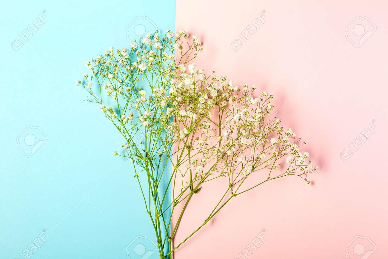 Creative banner with fresh white babys breath flower - 167780047