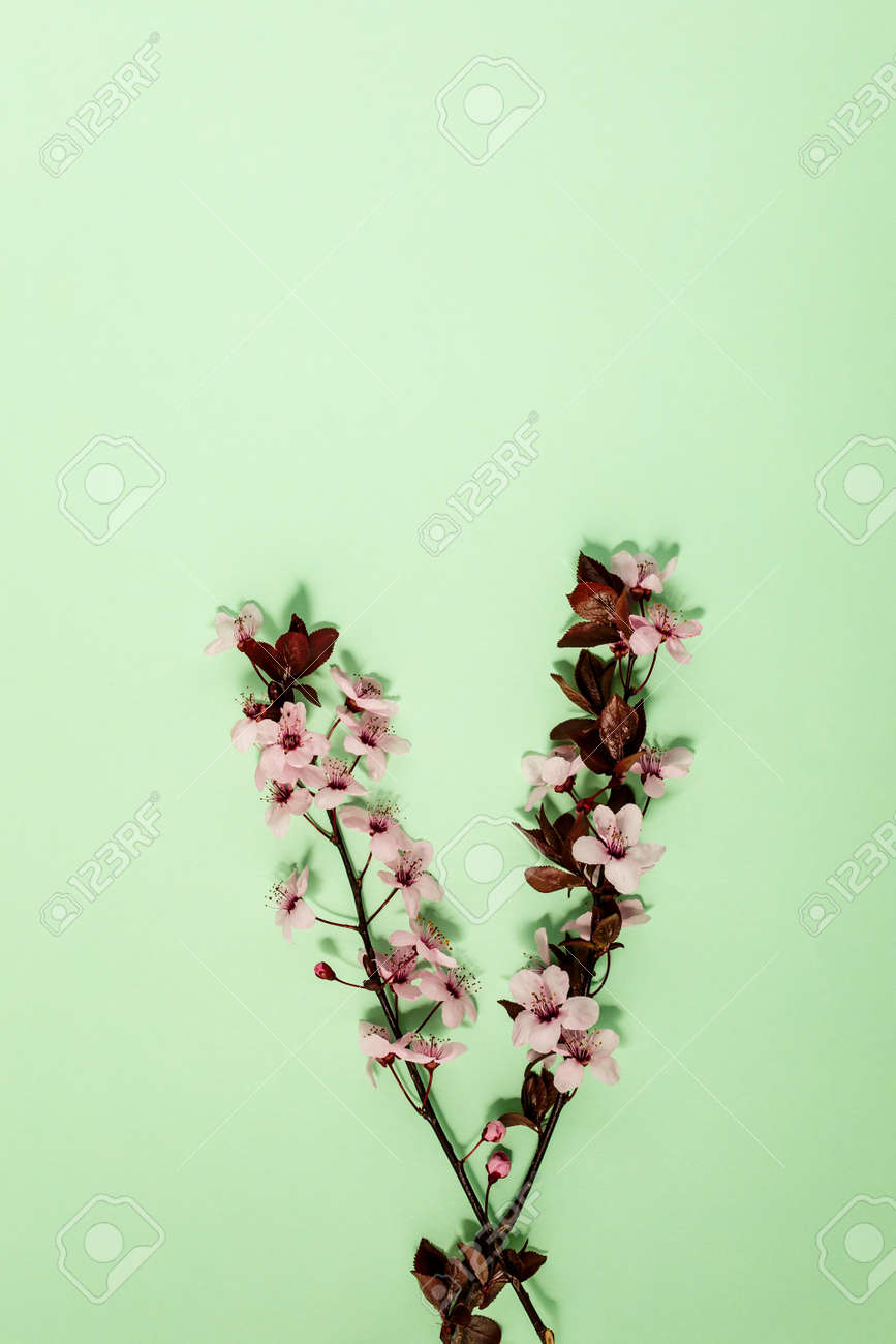 Creative flat lay flowers composition. Light pink flowers on pastel green background. Wedding. Birthday. Valentines Day. Mother's day. Flat lay, top view, copy space. - 167780048