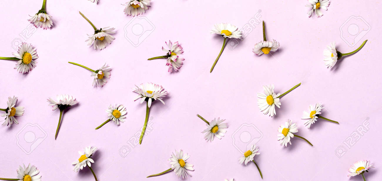 Pattern with fresh daisy flowers on pastel backround. - 167780054