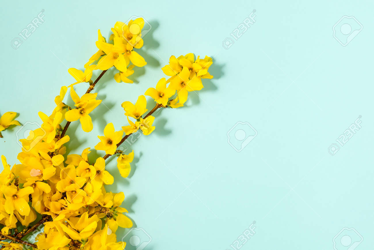 Pattern with fresh yellow flowers on pastel backround. - 167780055
