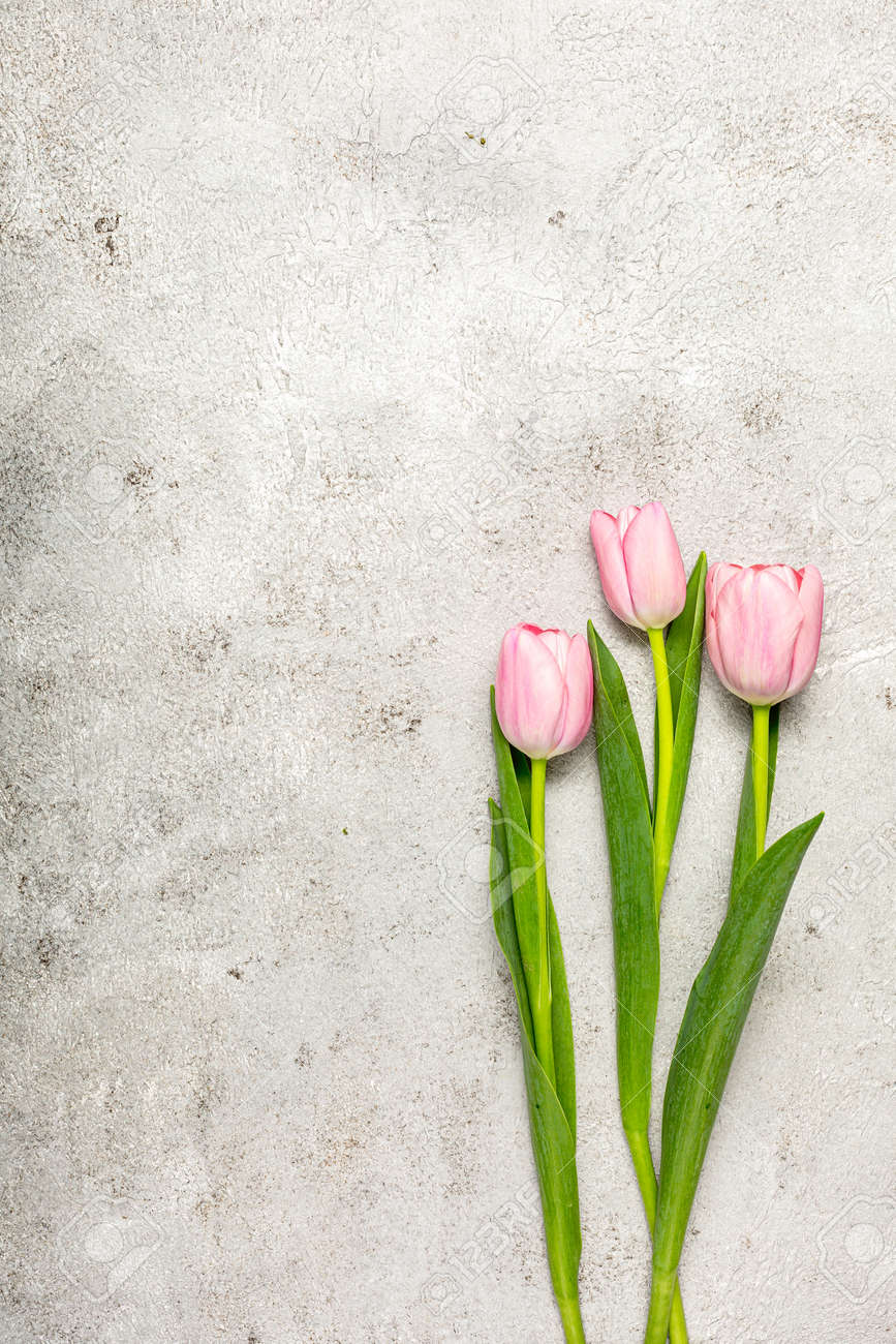 Fresh pink tulip flowers on ultimate gray wall - 172007880