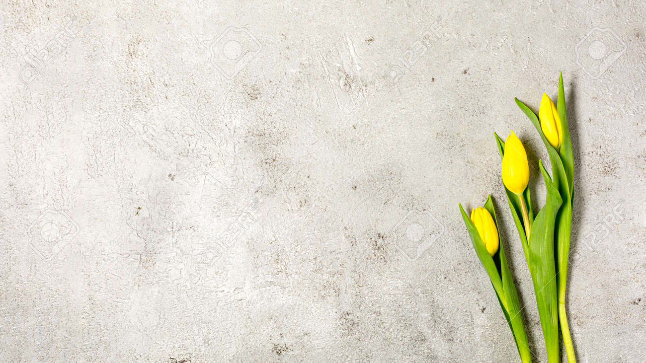 Fresh yellow tulip flowers on ultimate gray wall - 172007882