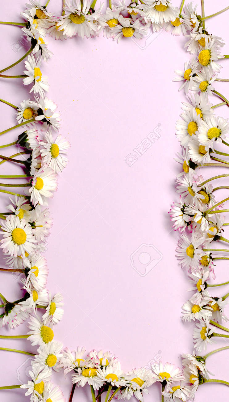 Pattern with fresh daisy flowers on pink pastel backround. - 173211275