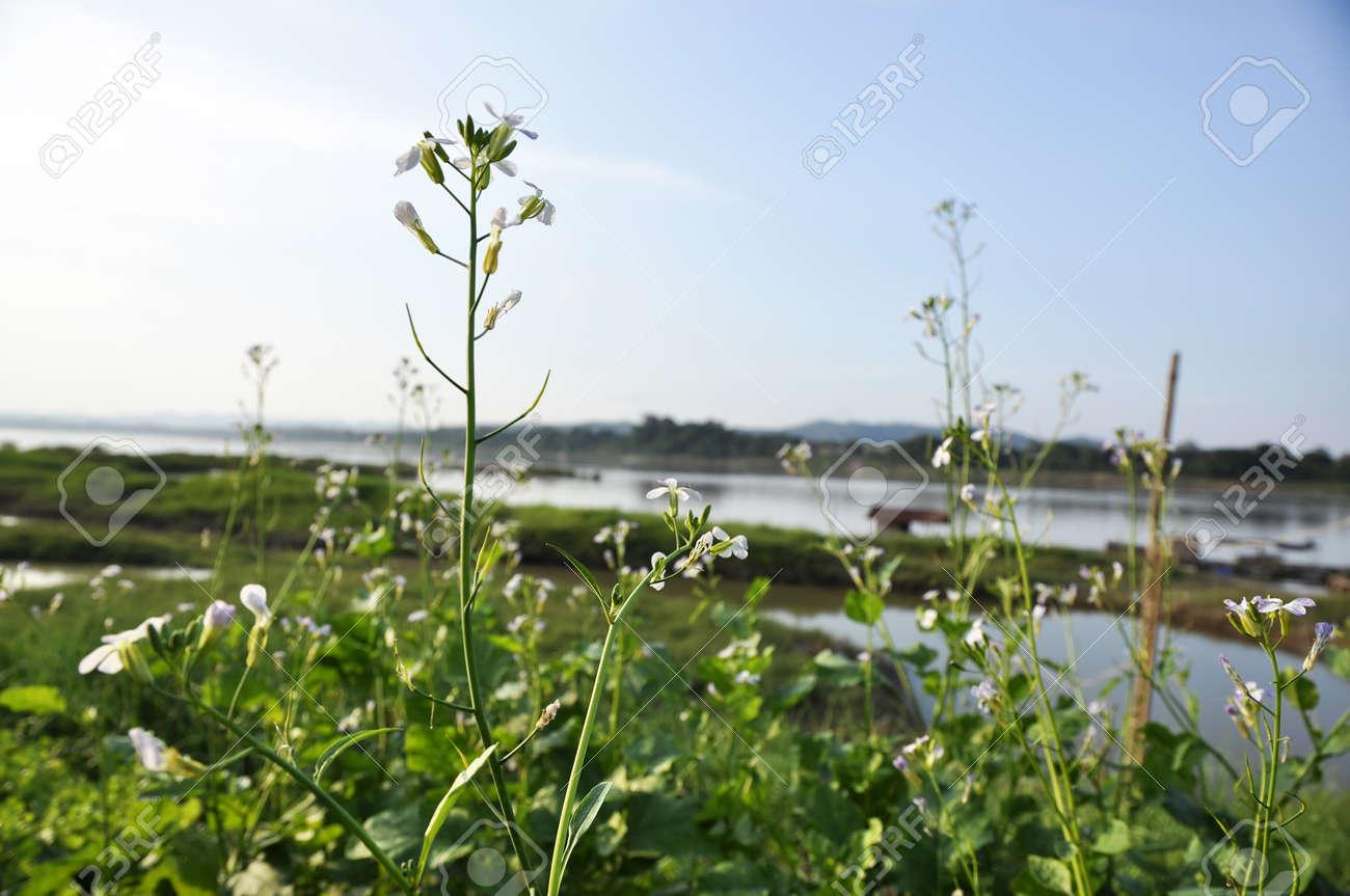 Kale Vegetable Plant Garden River Flower Stock Photo - 14538879