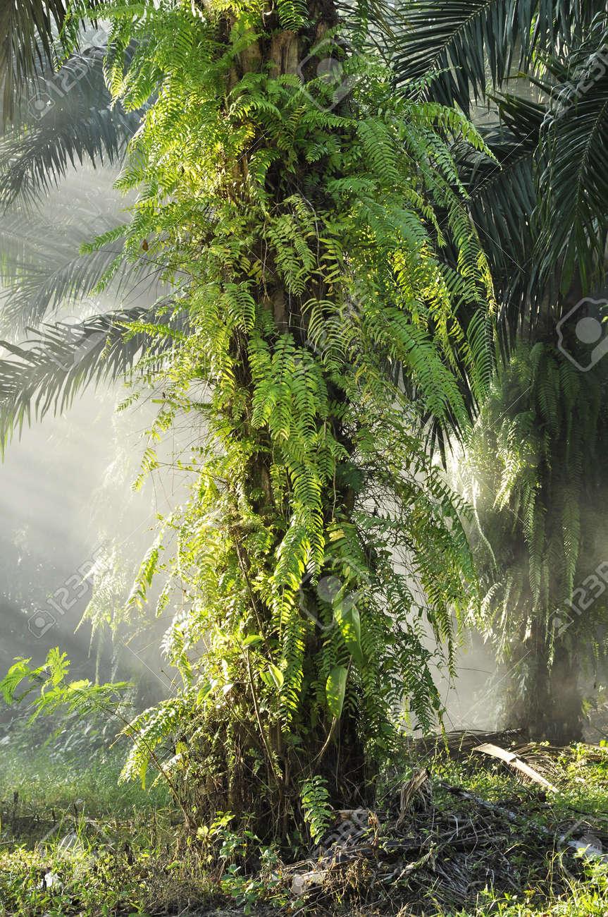 Palm Outdoor Fog Light Farm Day Stock Photo - 17355464