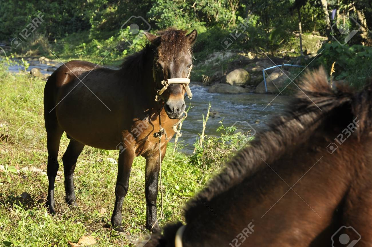 Horse Grass Field Brown Stand Stock Photo - 17419553
