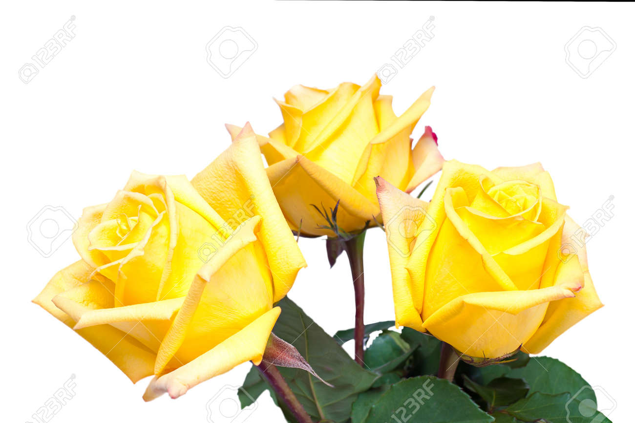 colorful flower bouquet from yellow roses isolated on white background Stock Photo - 15566916