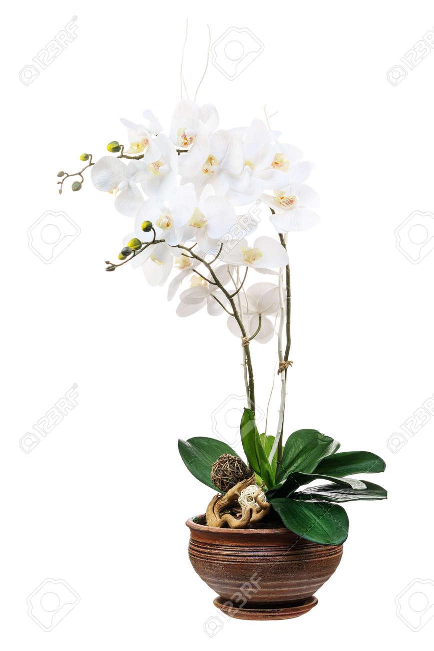 Arreglo Floral De Flores De Orquídeas Artificiales En Edad Maceta De Cerámica Aislado En El Fondo Blanco