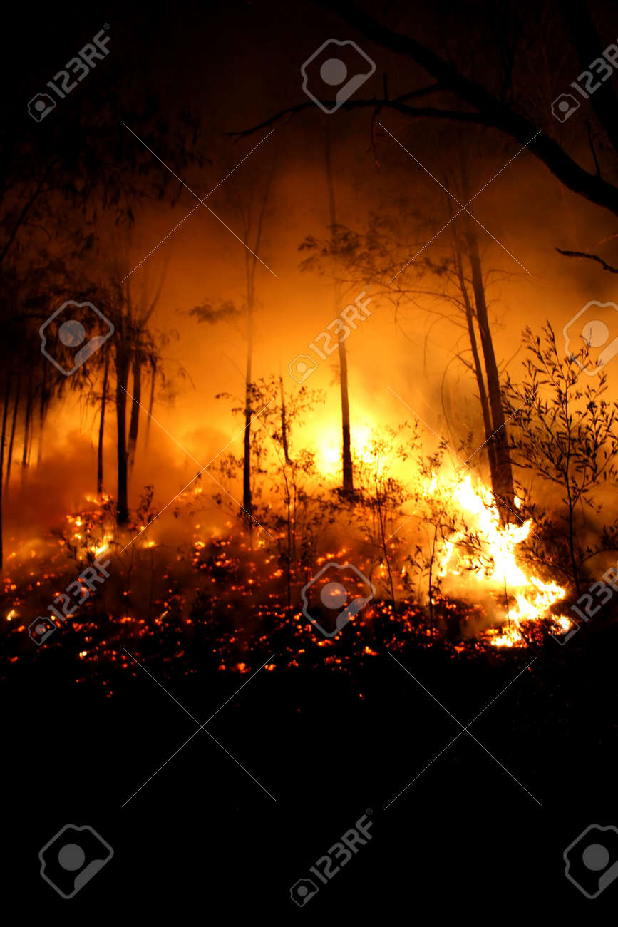 From a bushfire in 2007 where 2000 Hectares were burnt out. Stock Photo - 3736351