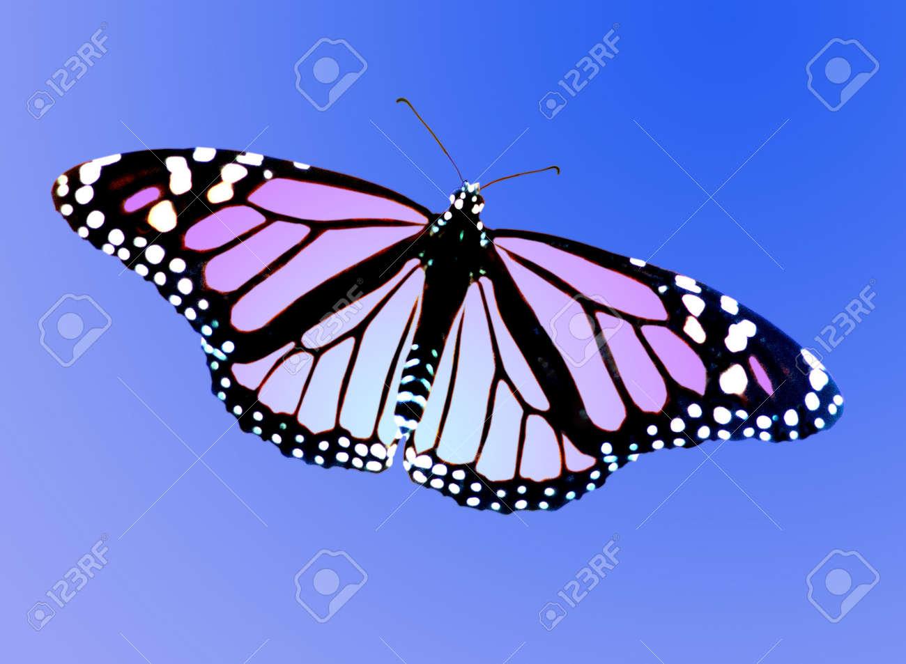 Artísticas Para Colorear De Una Mariposa Monarca En Un Azul