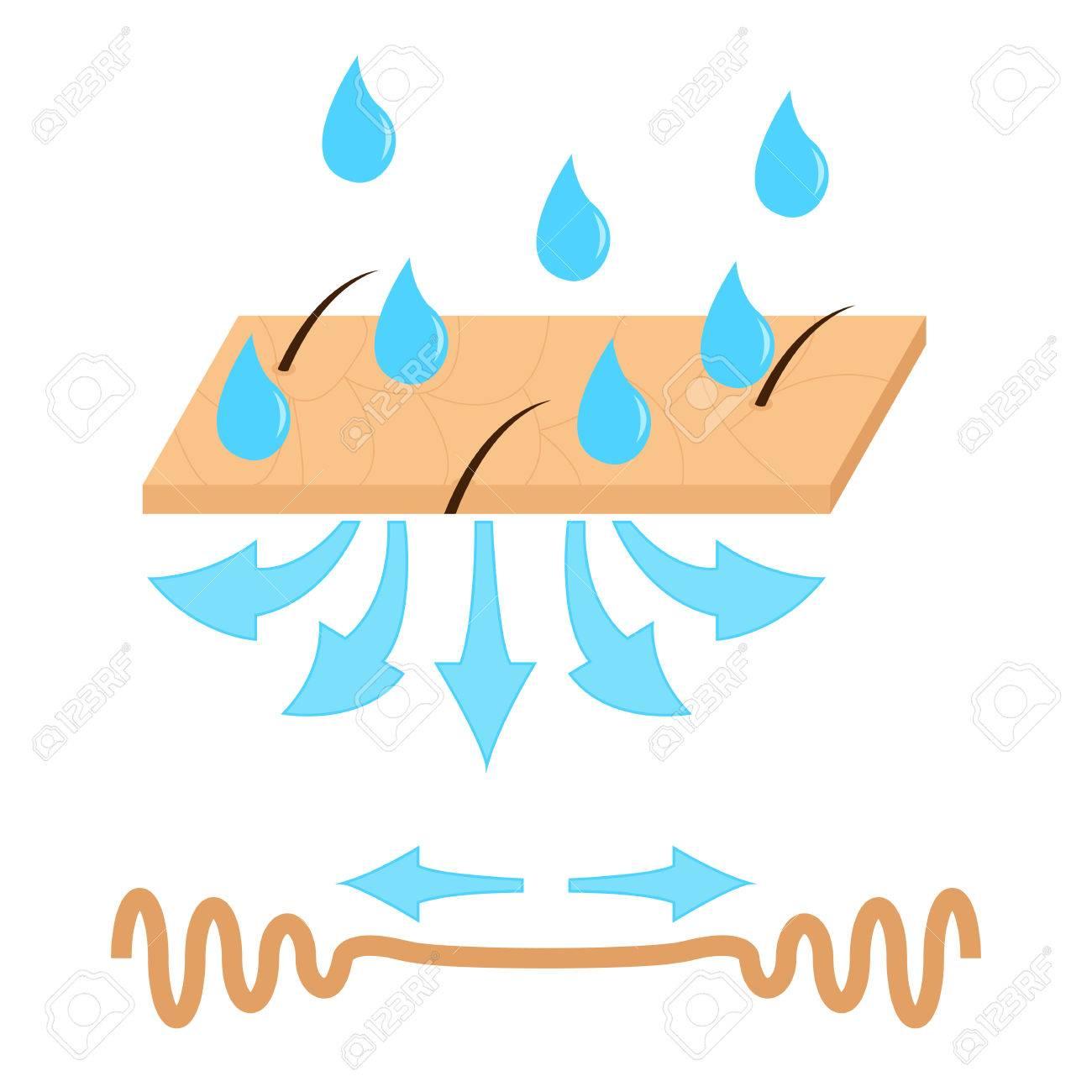 肌の水分補給としわベクトル イラストのイラスト素材ベクタ Image