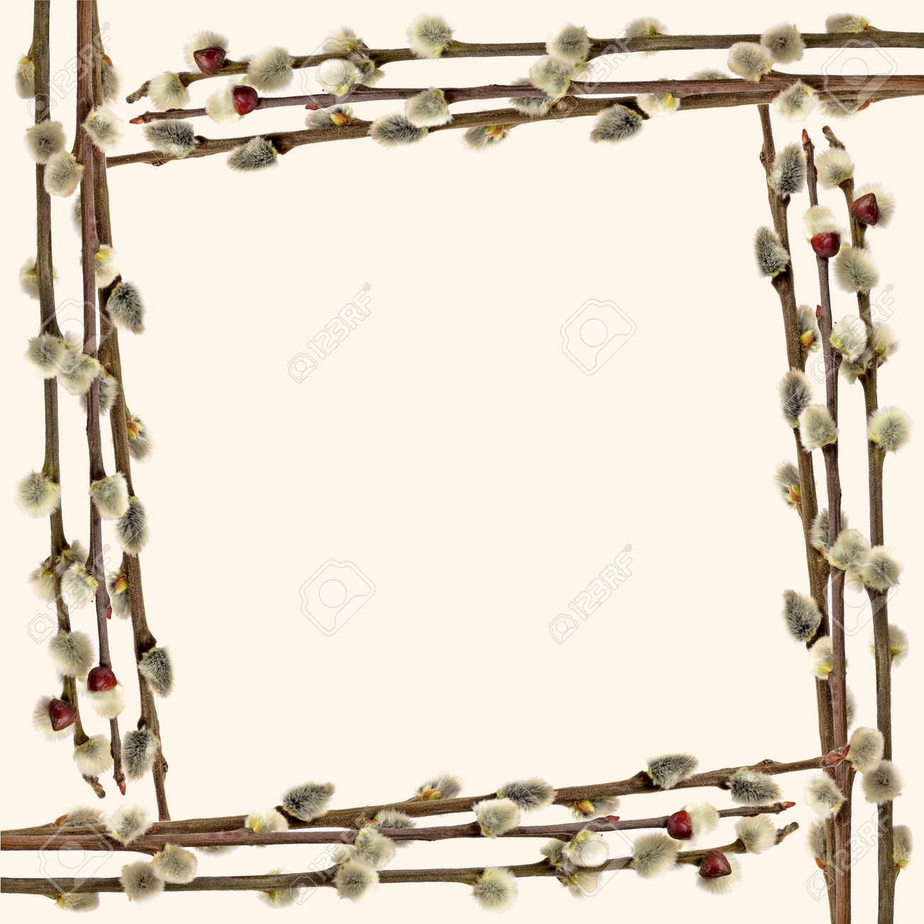 Der Rahmen Von Weidenzweigen. Getrennt Auf Weißem Hintergrund ...