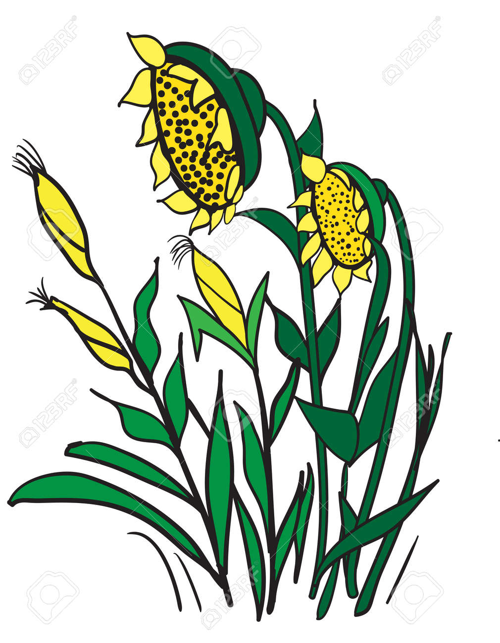 Illustration Of Cartoon Corn And Sunflowers On A White Background Stock Vector