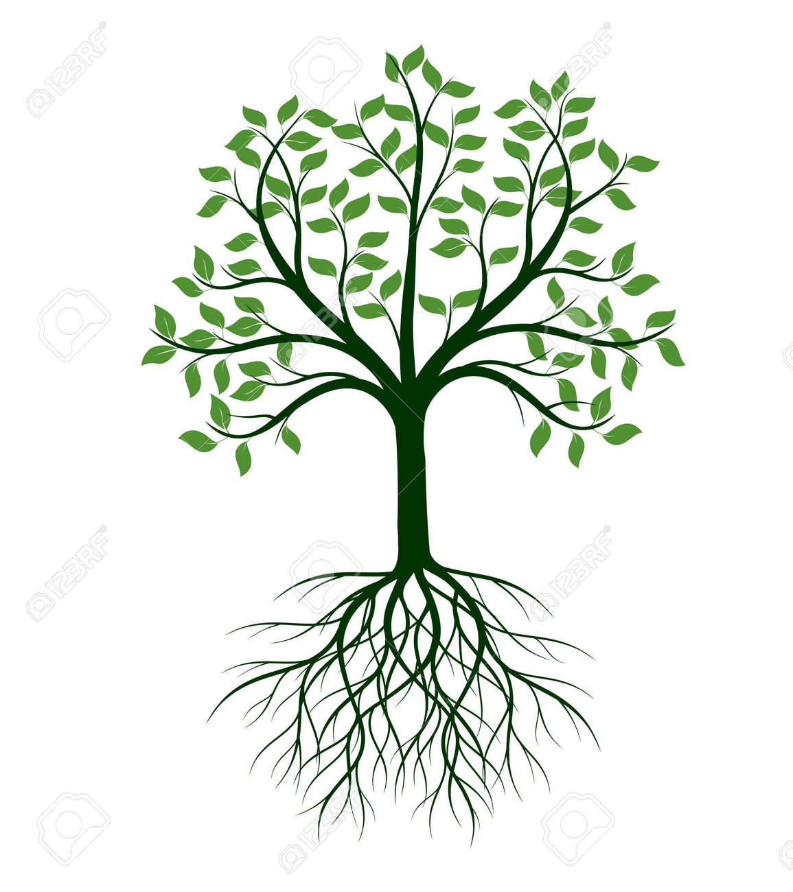 Shape of Tree with leaves and Roots. Vector outline Illustration. Plant in Garden. - 169608819