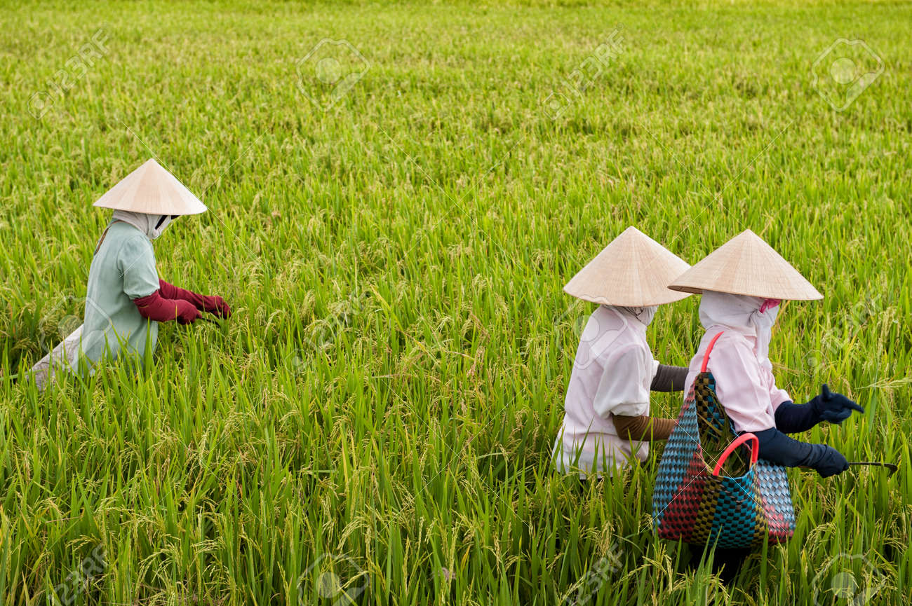 Image result for vietnam women working  free images