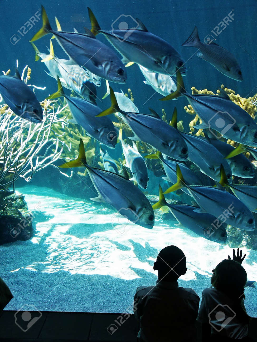 A boy and girl watch fish in an aquarium Stock Photo - 429964