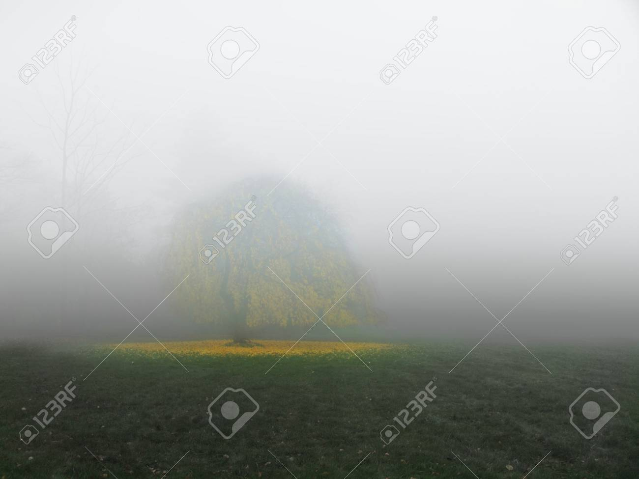 Tree in meadow with fog Stock Photo - 7574066