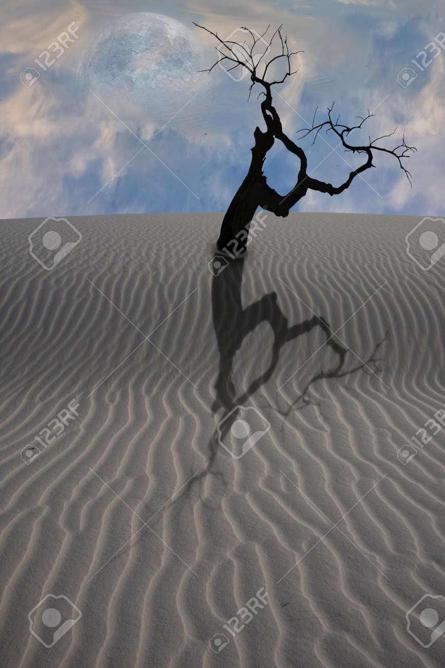 Desert Scene Stock Photo - 8698846