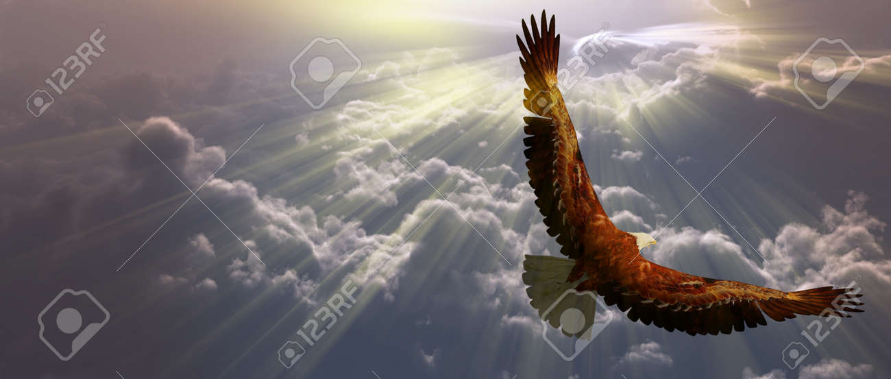 Eagle in flight above tyhe clouds Stock Photo - 11799883