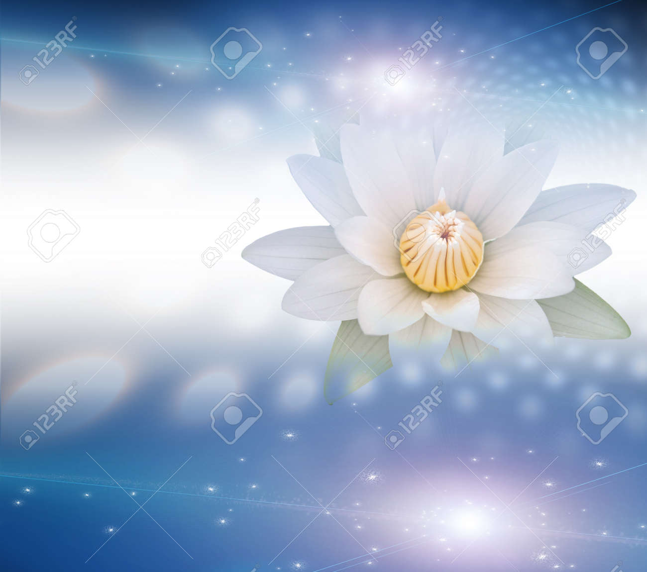 Lotus White Stock Photo - 12441686
