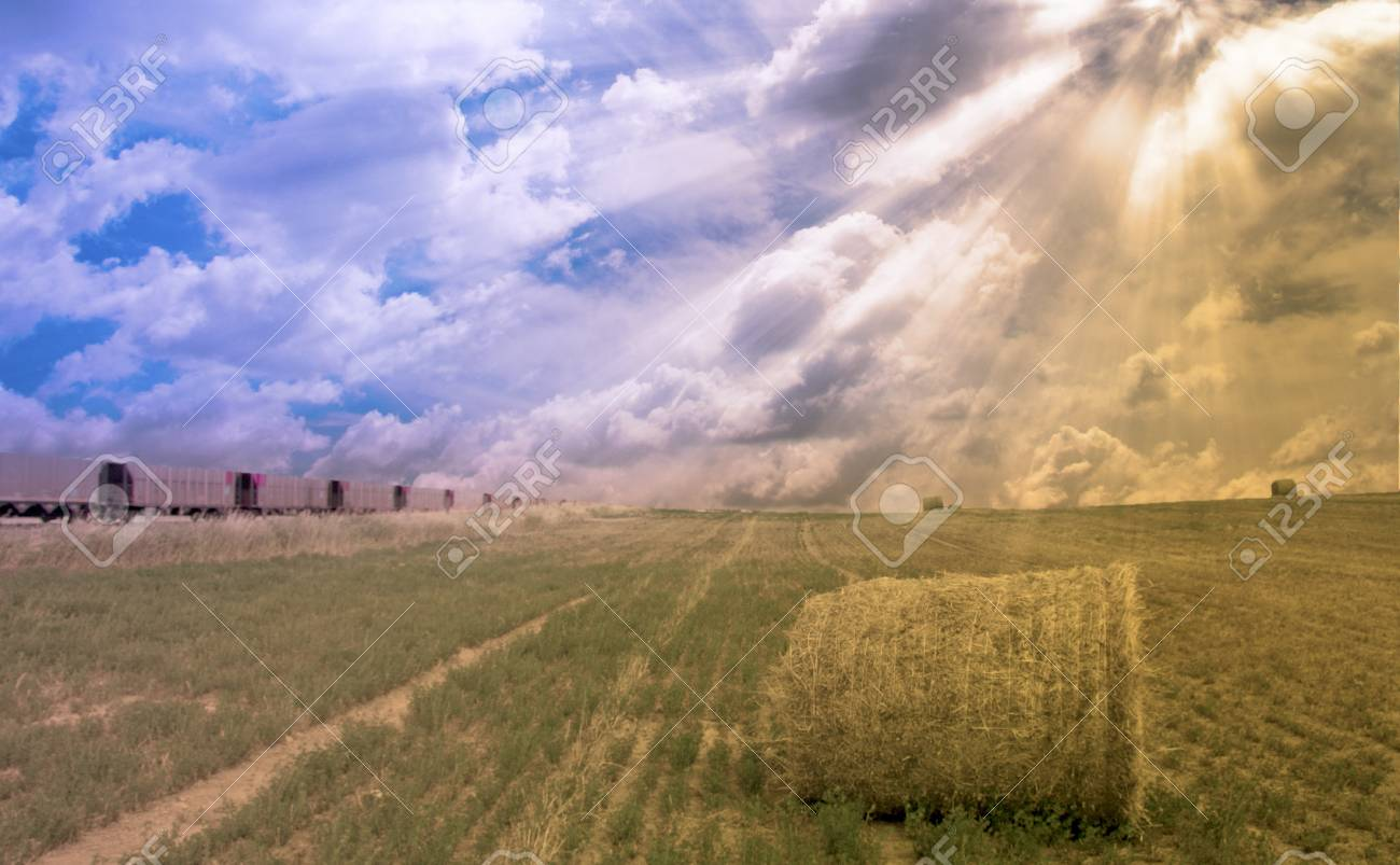 Train and field with hay Stock Photo - 12784478