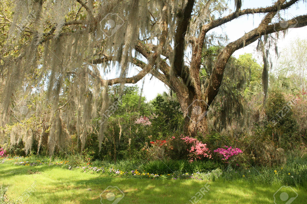 Charming Southern Gardens Stock Photo, Picture And Royalty Free ...